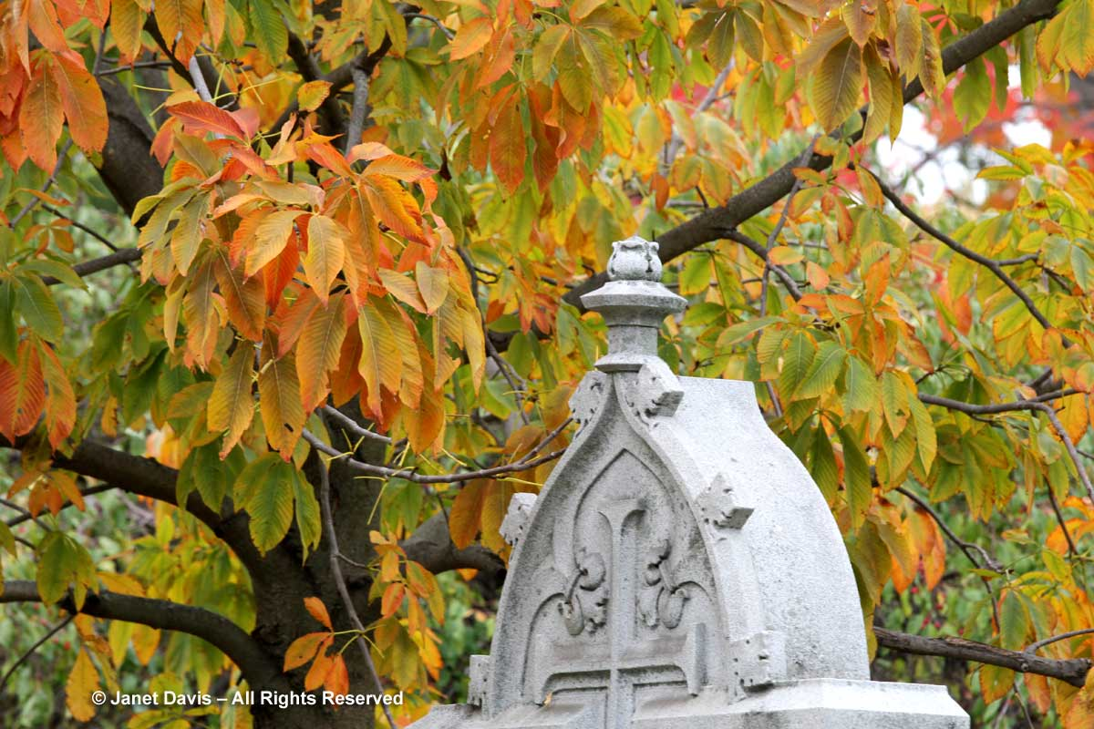 buckeye-aesculus-mount-pleasant-cemetery