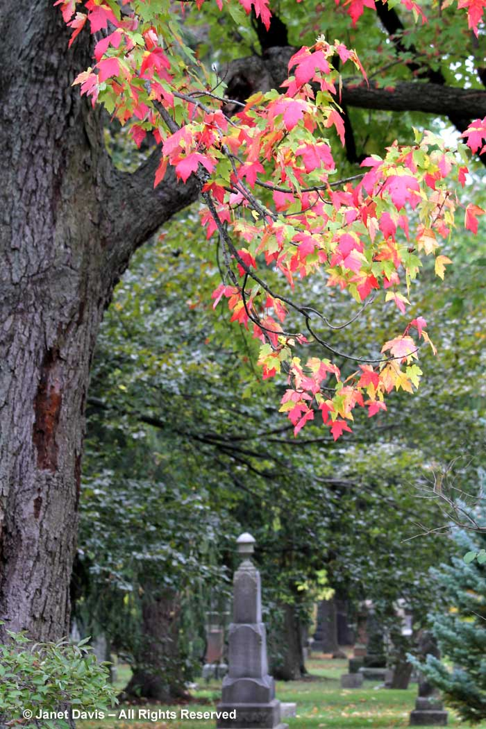 freeman-maple-mount-pleasant-cemetery