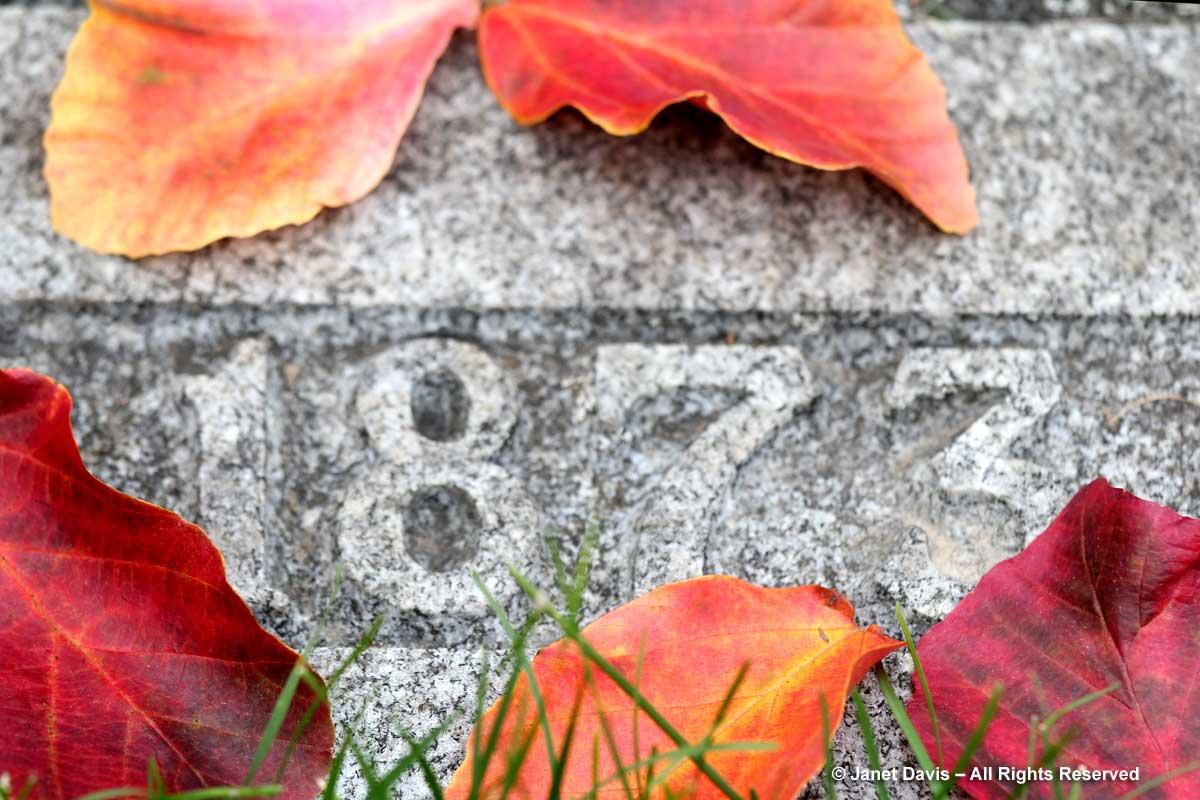 parrotia-persica-mount-pleasant-cemetery