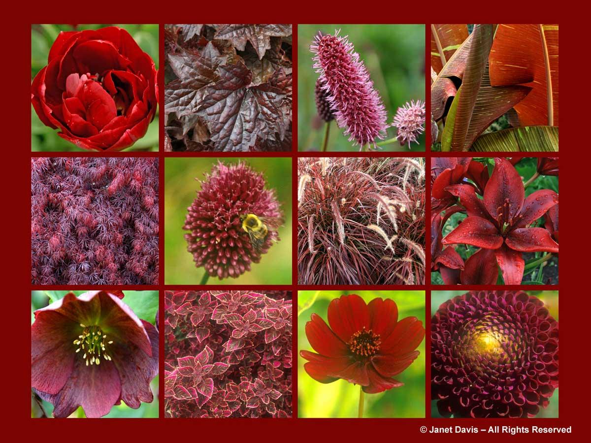 Red/Wine | Janet Davis Explores Colour