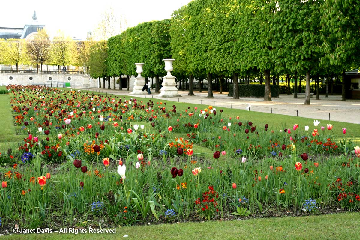 05-tulipa-queen-of-night-tuileries
