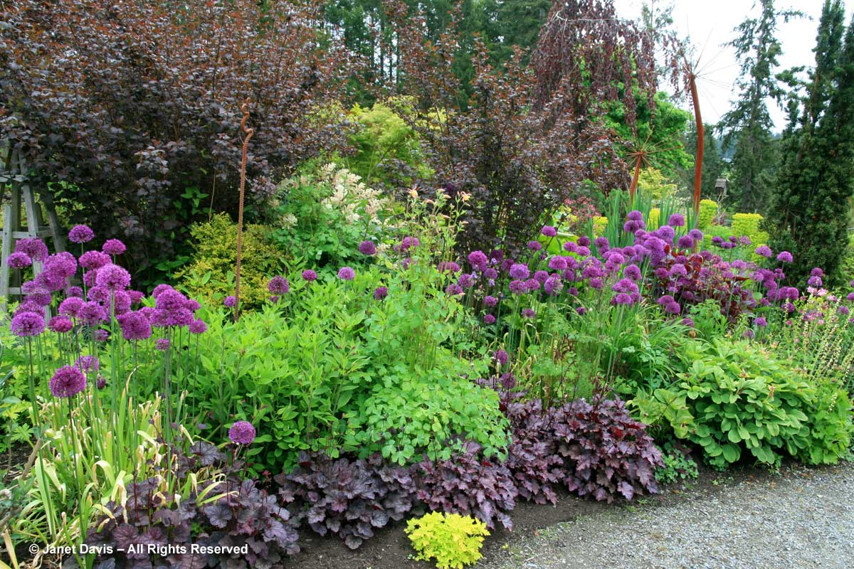 12-heuchera-amethyst-mist-physocarpus-diablo-horticutlure-centre-of-the-pacific