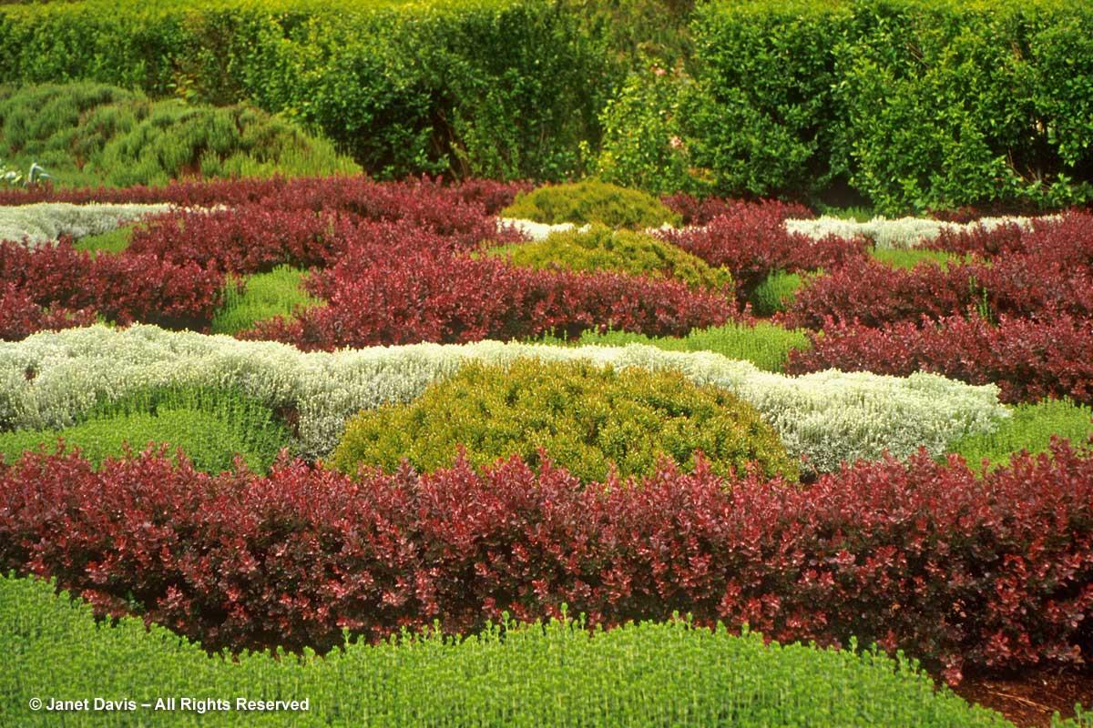 28-berberis-knot-garden-filoli