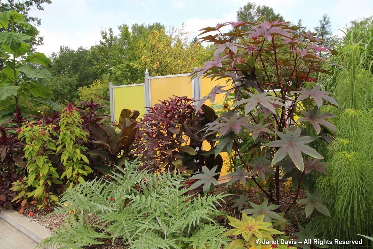 martagon lily | Janet Davis Explores Colour