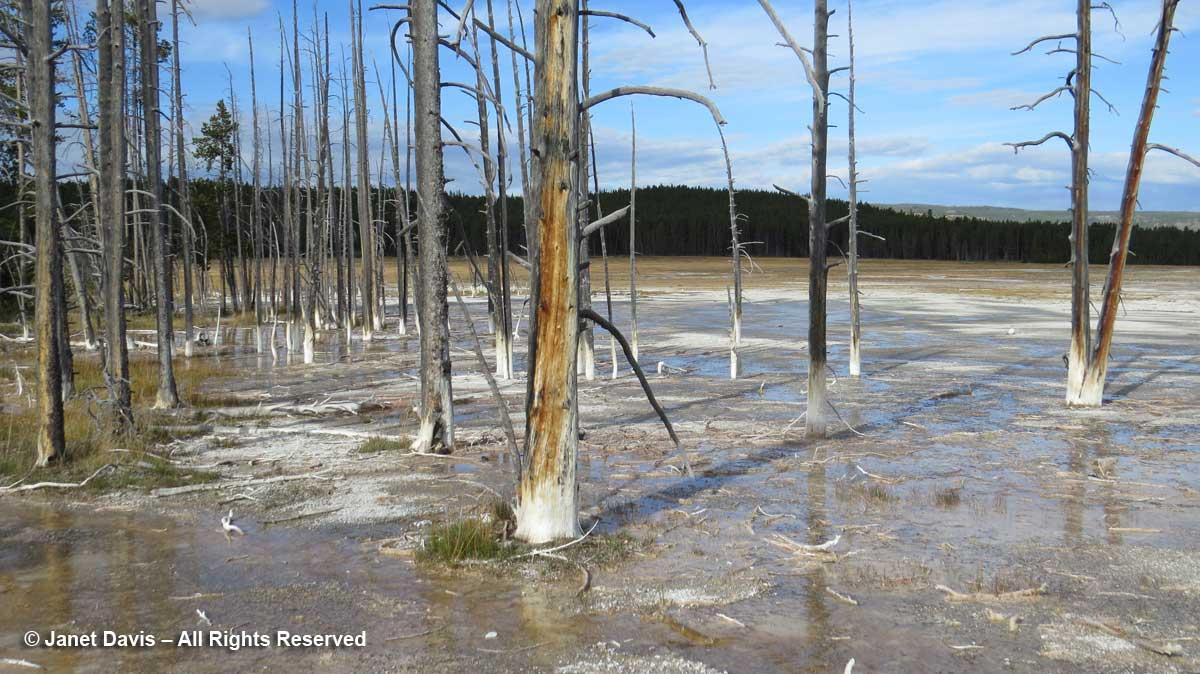 40-lower-geyser-basin-bobby-socks-trees