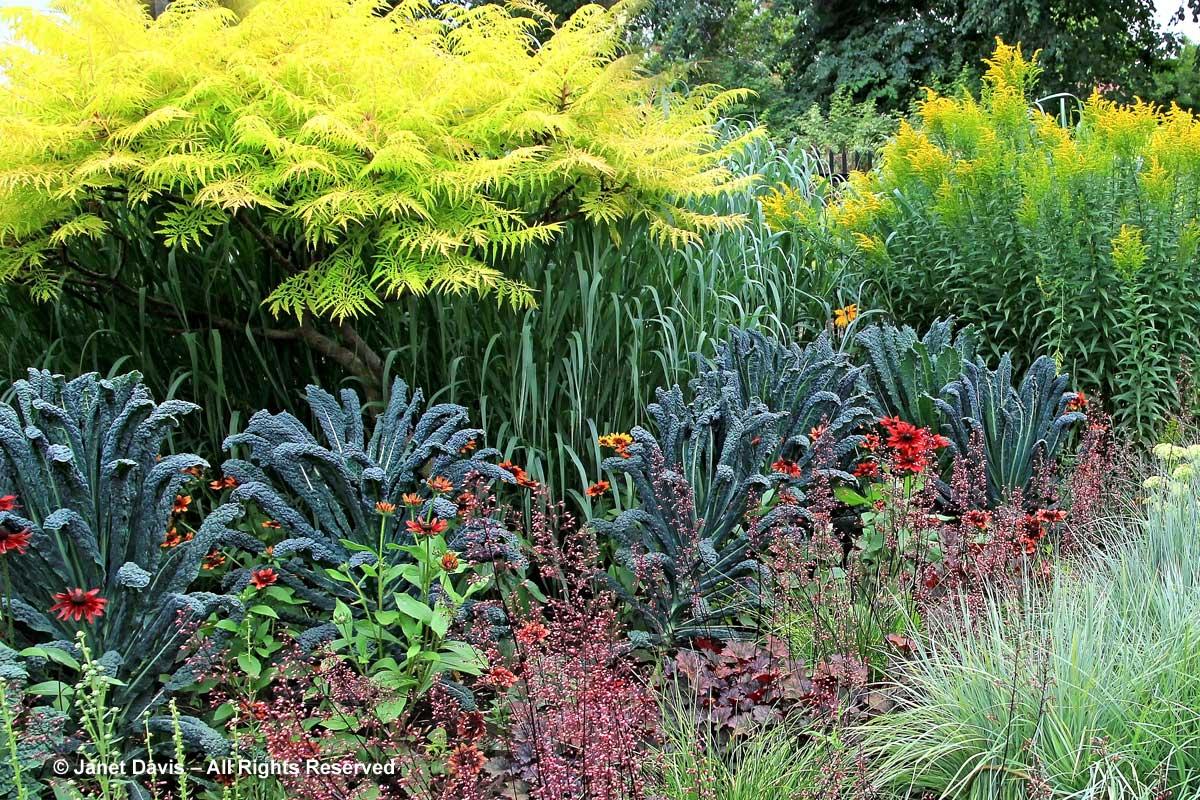 brassica-nero-di-toscana-montreal-botanical-garden