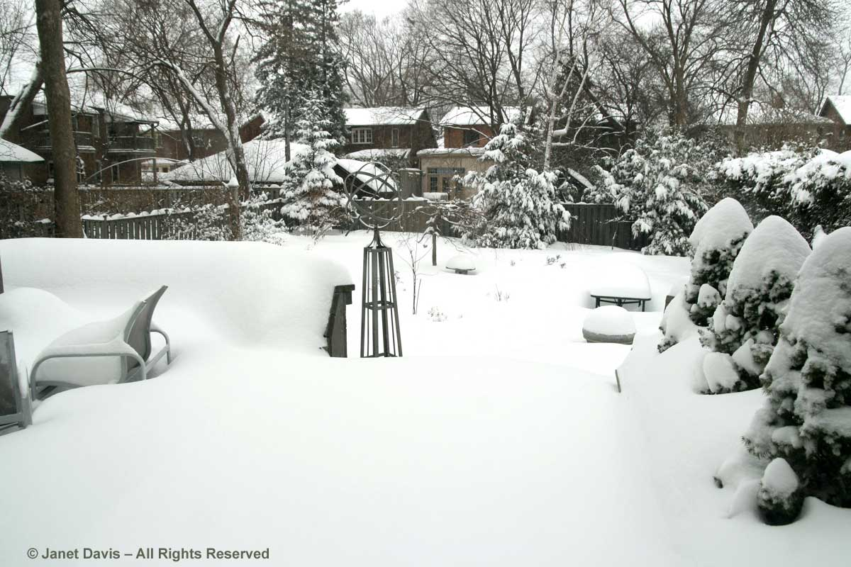 janet-davis-back-garden-in-snow