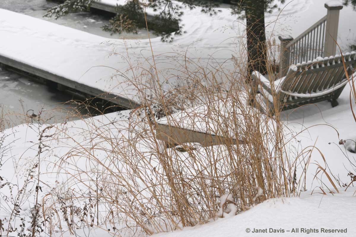 panicum-virgatum-muskoka-winter-snow