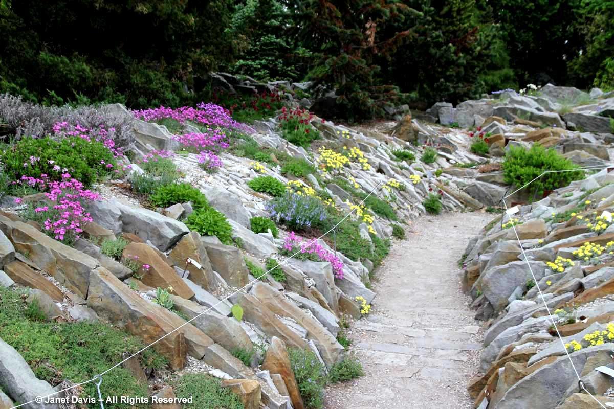 Crevice garden-Alpinum-Alpine-Zdeněk Zvolánek-Montreal Botanical