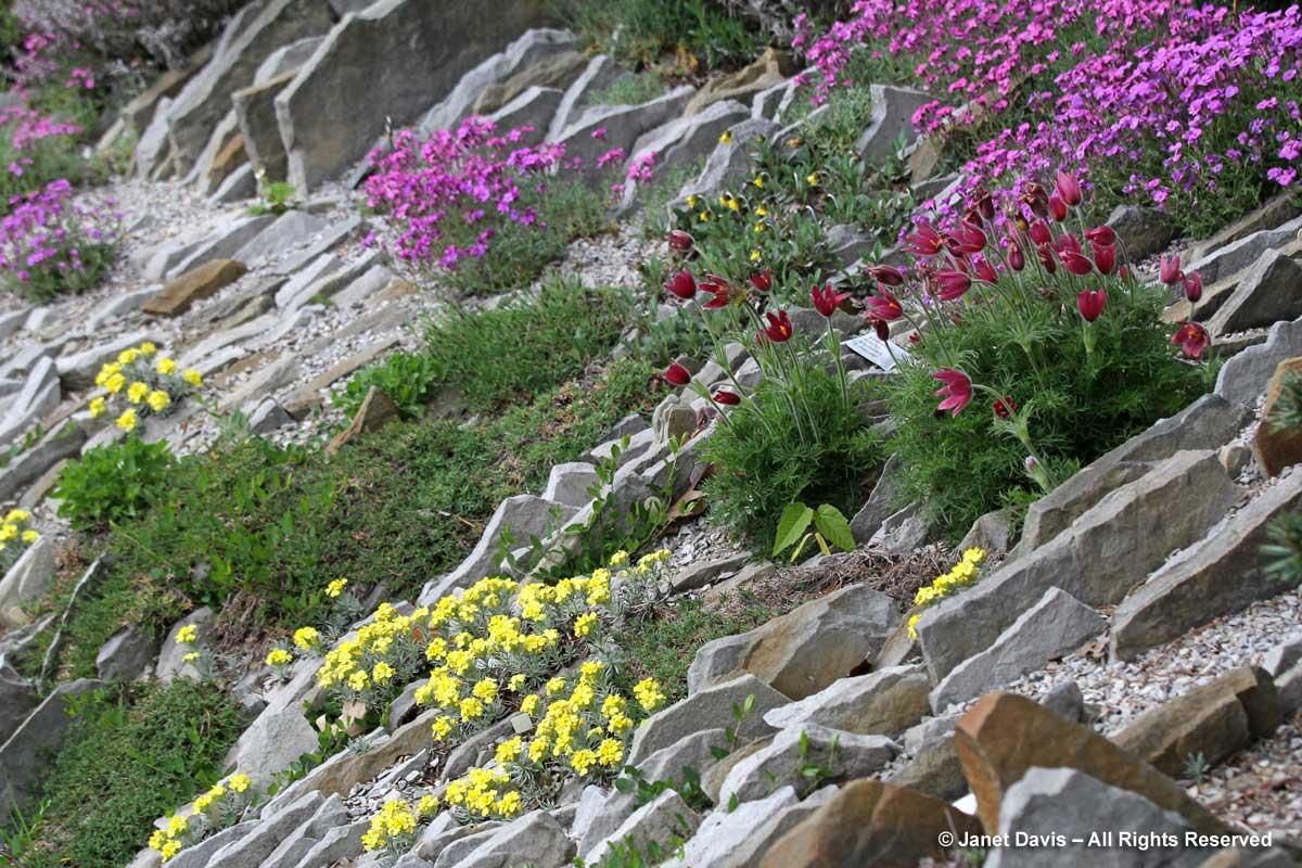 Spring alpines-Alpinum-Crevice Garden-Zdeněk Zvolánek-Montreal Botanical