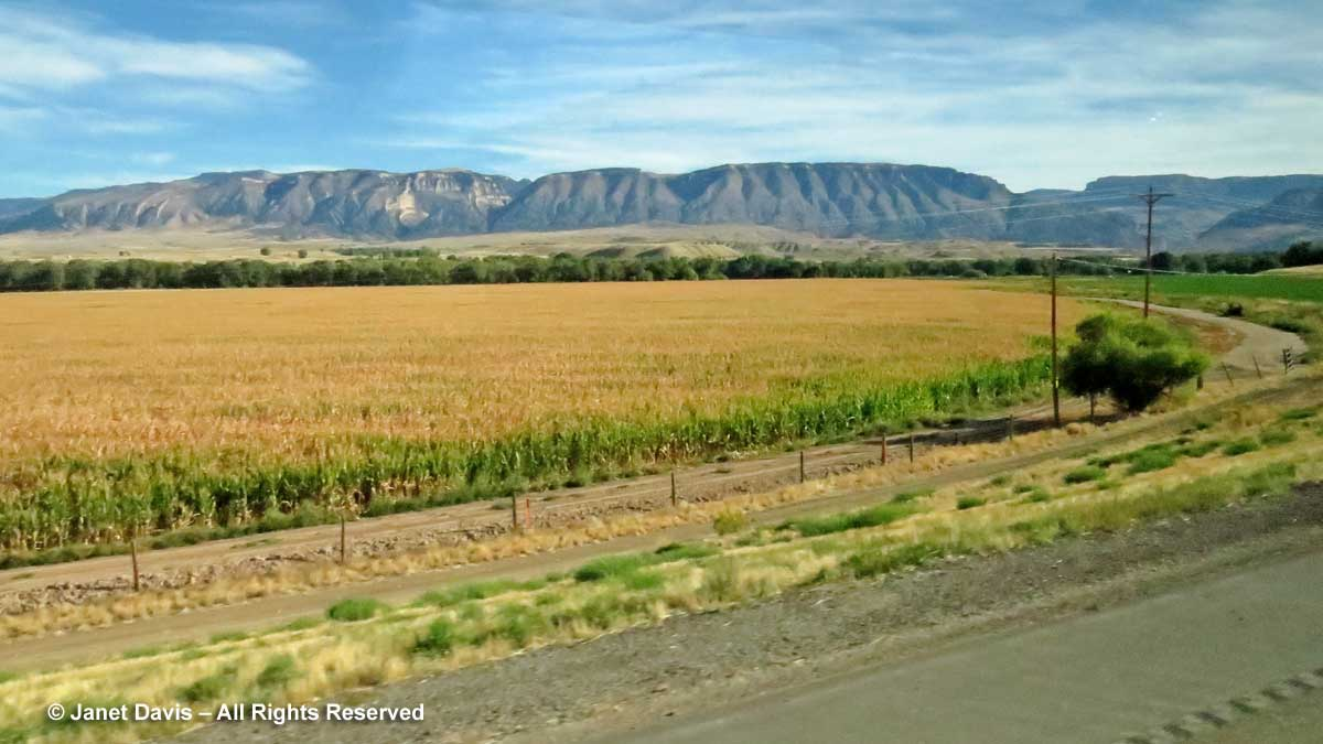 Dented corn field-Greybull Wyoming