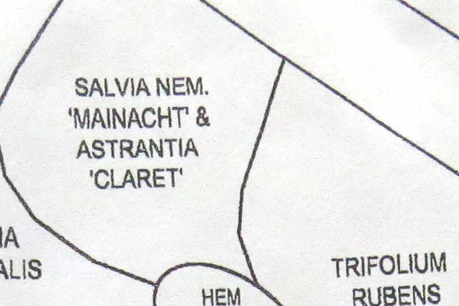 Design-Astrantia major 'Claret' & Salvia nemorosa 'Mainacht'-Piet Oudolf design-Toronto Botanical Garden