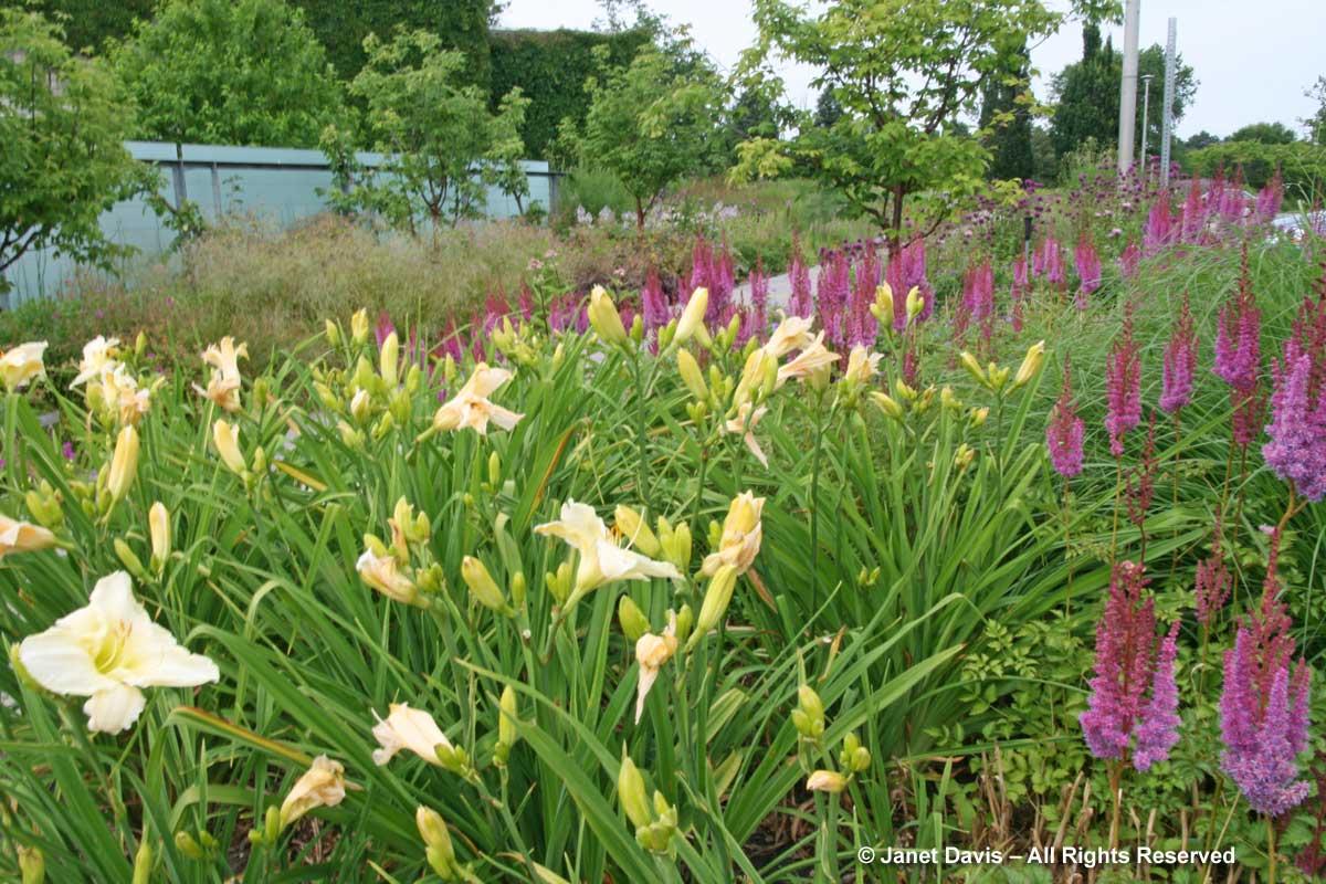 Design-Hemerocallis 'Gentle Shepherd' & Astilbe chinensis var. tacquetii 'Purpurlanze'-Piet Oudolf border-Toronto Botanical Garden