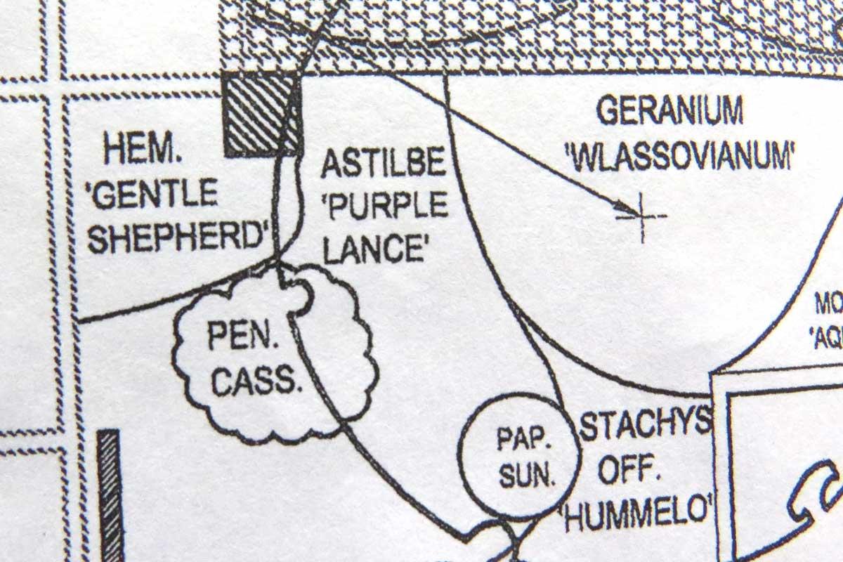 Design-Hemerocallis 'Gentle Shepherd' & Astilbe chinensis var. tacquetii 'Purpurlanze'-Piet Oudolf design-Toronto Botaniical Garden