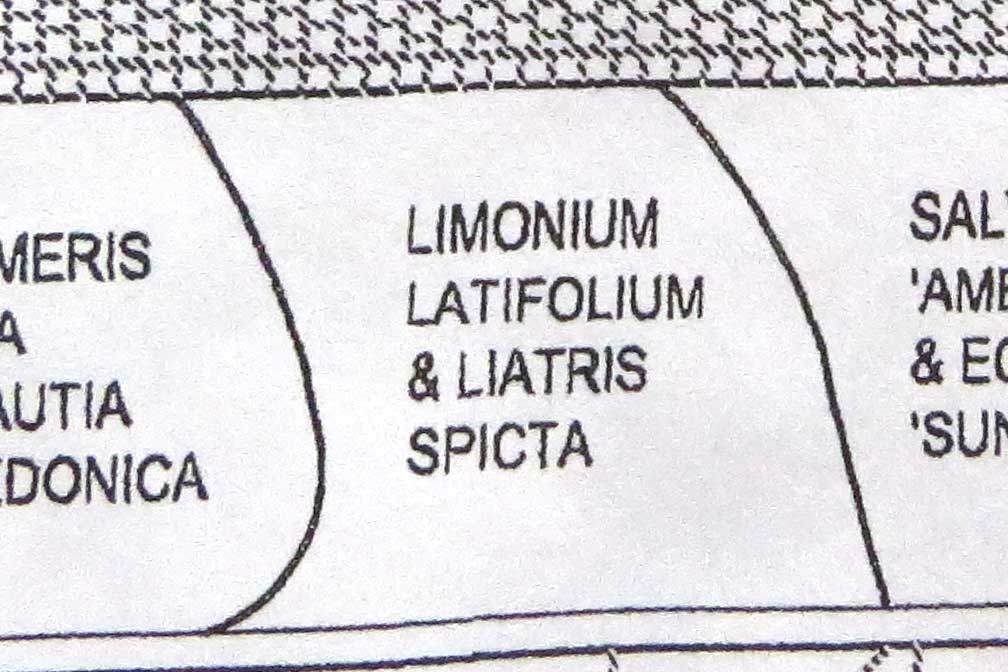 Design-Limonium latifolium & Liatris spicata-Piet Oudolf garden-Toronto Botanical Garden (2)