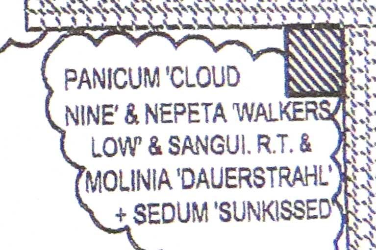 Design-Nepeta racemosa 'Walker's Low' & Panicum virgatum 'Cloud Nine'-Piet Oudolf design-Toronto Botanical Garden