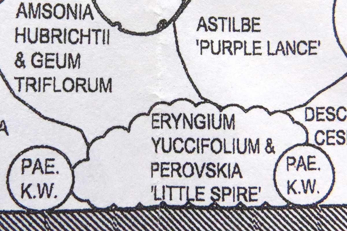Design-Perovskia 'Little Spire' & Eryngium yuccifolium-plan