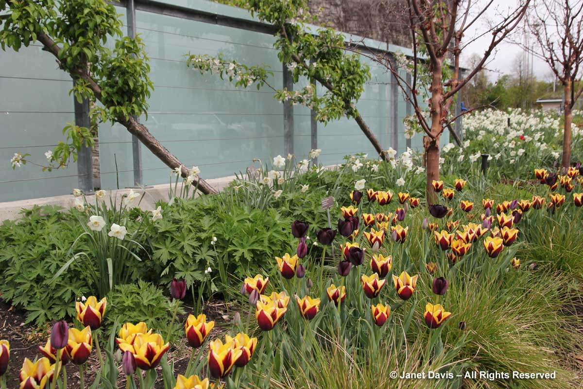 Design-Piet Oudolf Screen2-May-Toronto Botanical Garden