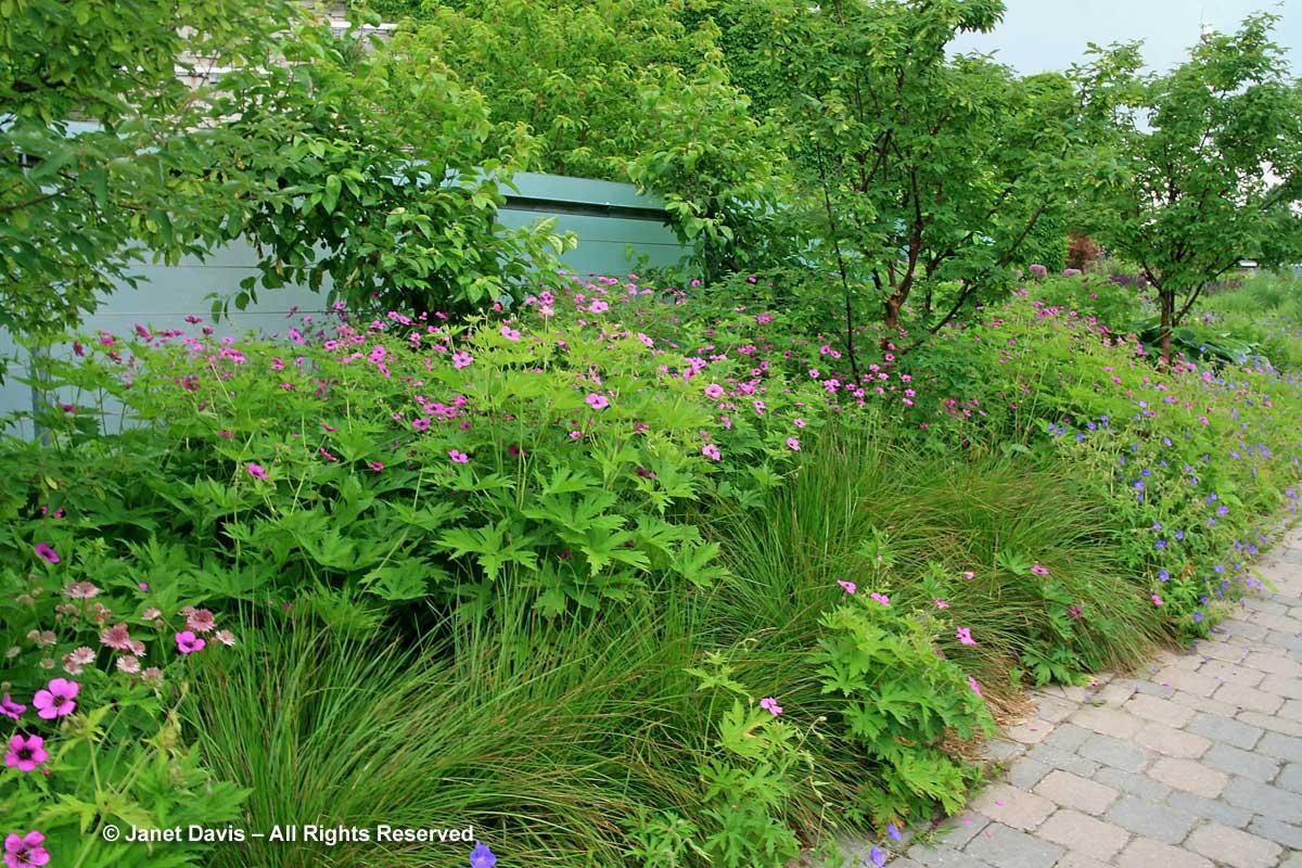 Design-Piet Oudolf Screen4-June-Toronto Botanical Garden