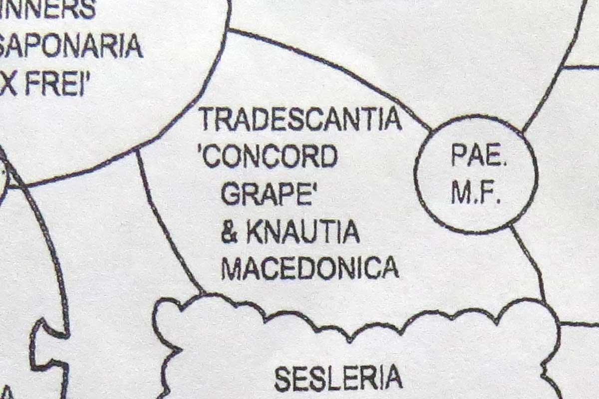Design-Tradescantia 'Concord Grape' & Knautia macedonica-Piet Oudolf-Toronto Botanical Garden