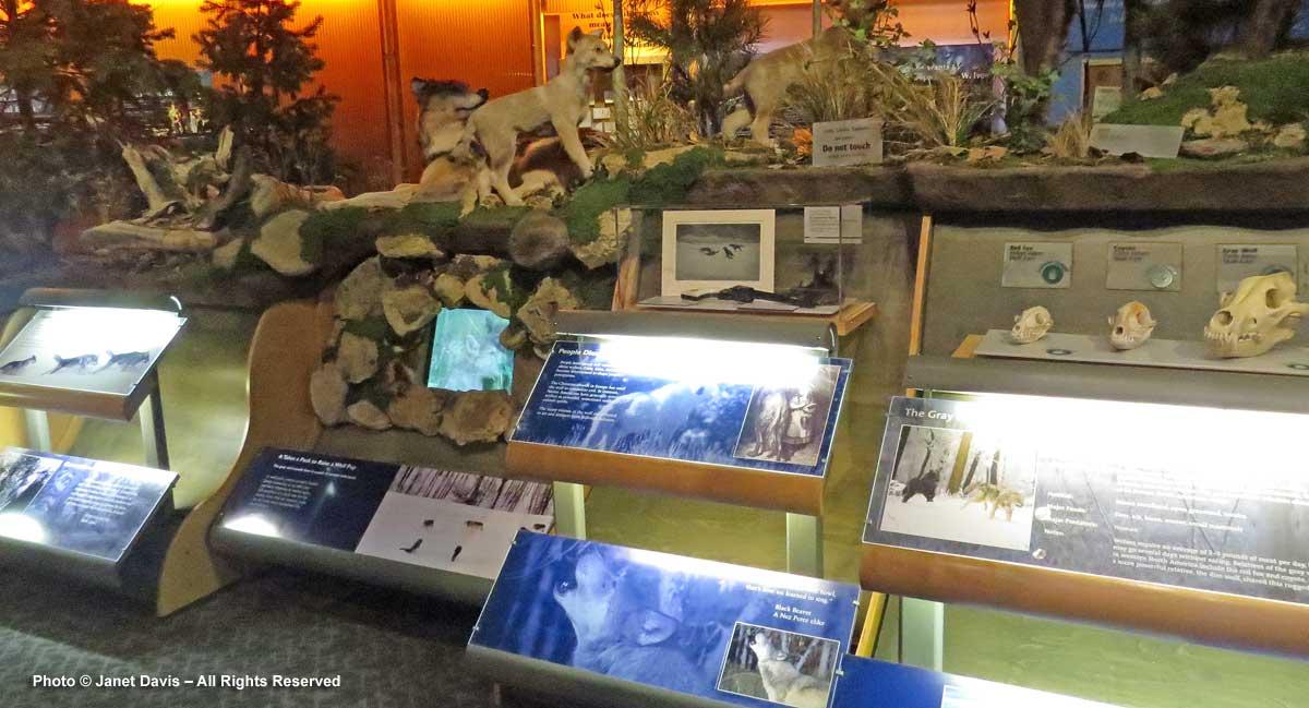Draper Natural History Museum-animal display