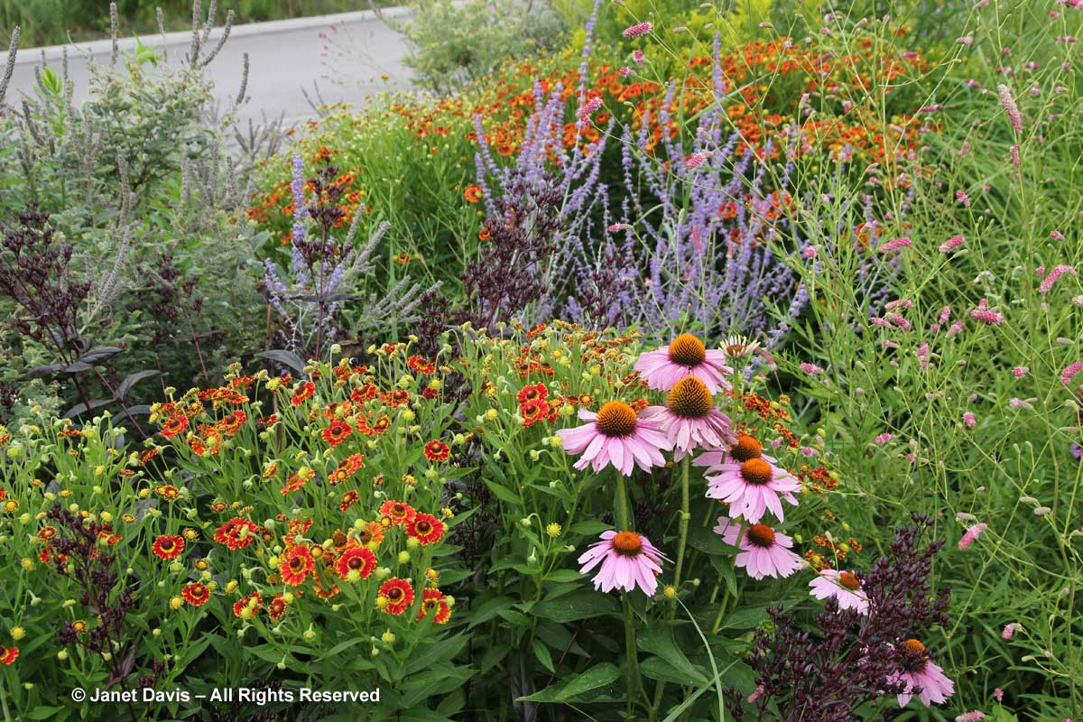 Piet oudolf janet davis explores colour for Piet oudolf planting schemes