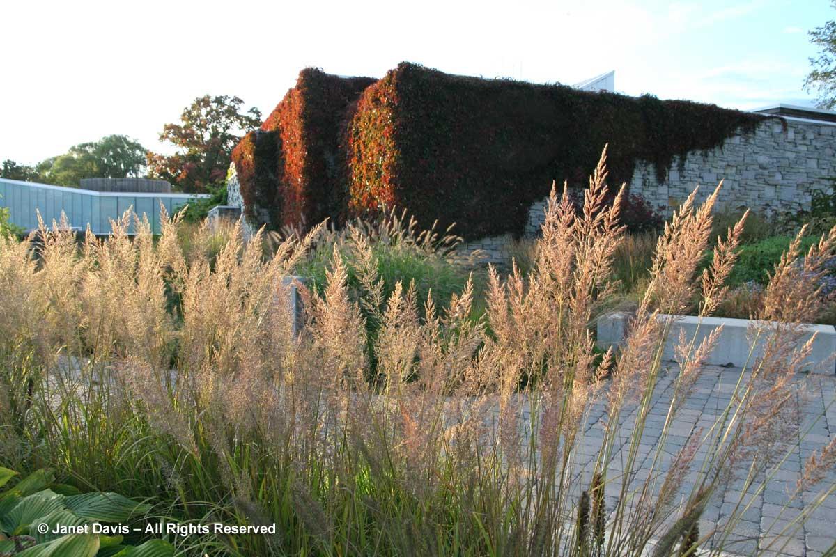 Grasses-Calamagrostis brachytricha-fall-Piet Oudolf border-Toronto Botanical Garden
