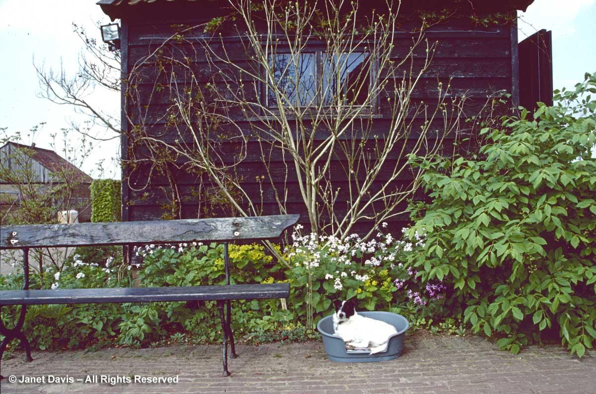 Hummelo-1999-Piet Oudolf-dog