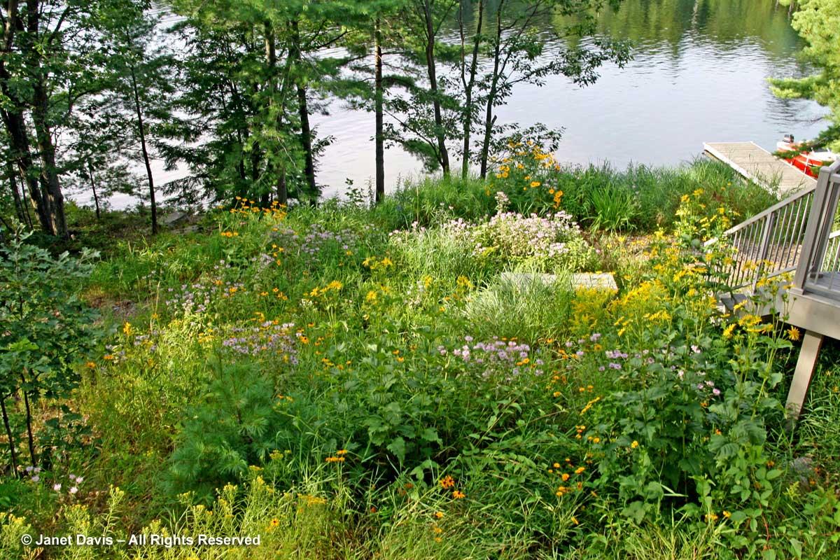 Janet Davis-East Meadow- Lake Muskoka