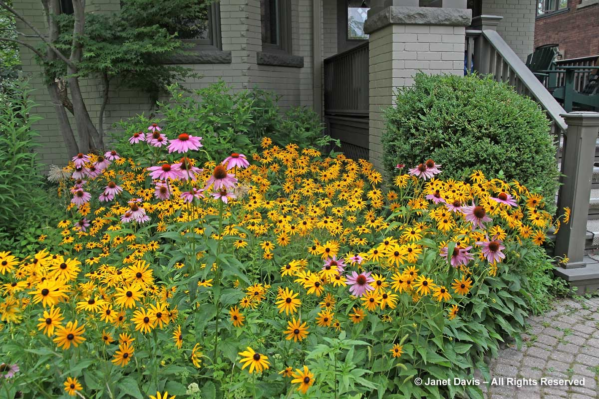 Janet-Davis-Toronto front garden
