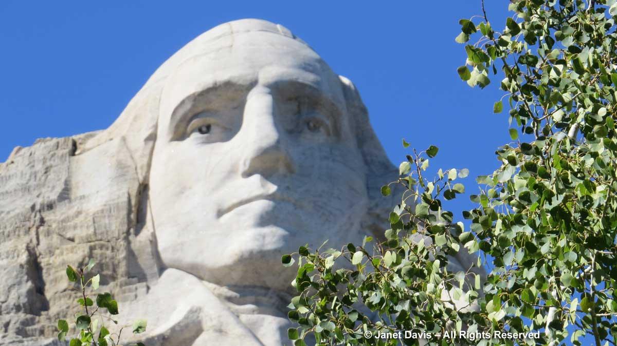 Mount Rushmore-George-Washington-quaking aspen-Populus tremuloides
