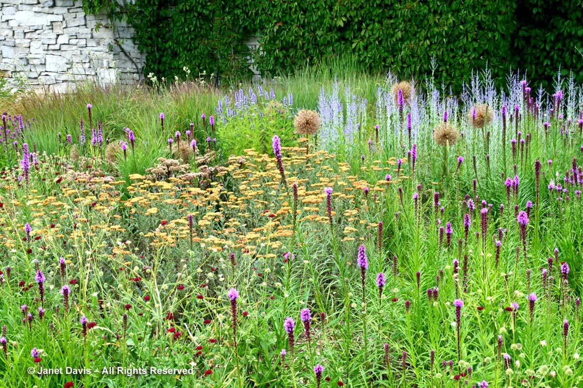 Natives-Liatris spicata-Yarrow-Perovskia-Knautia-Piet Oudolf border-Toronto Botanical Garden