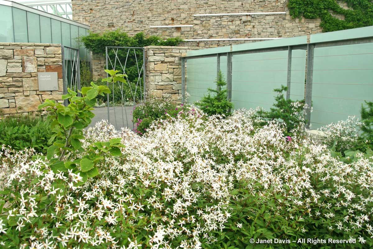 Natives-Porteranthus trifoliatus-Gillenia-Piet Oudolf border-Toronto Botanical Garden