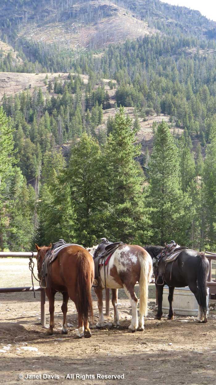 Pahaska Tepee-Trail Horses