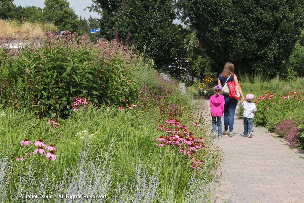 Piet Oudolf Entry Garden-Toronto Botanical Garden