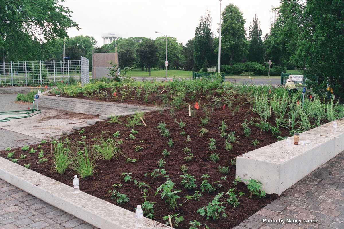 Planted area-Oudolf entry garden-Toronto Botanical Garden