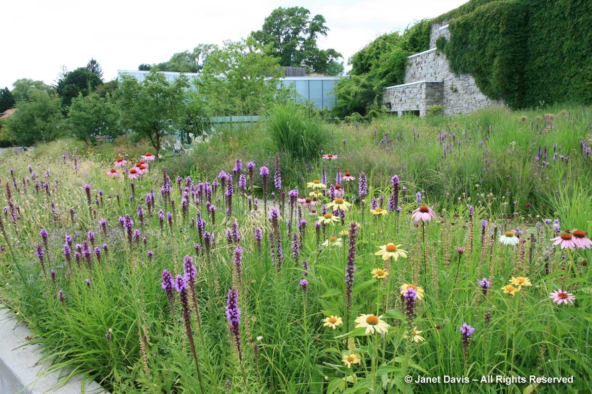 Plants-Short-lived- Echinacea 'Sunrise'-Piet Oudolf borer-Toronto Botanical Garden