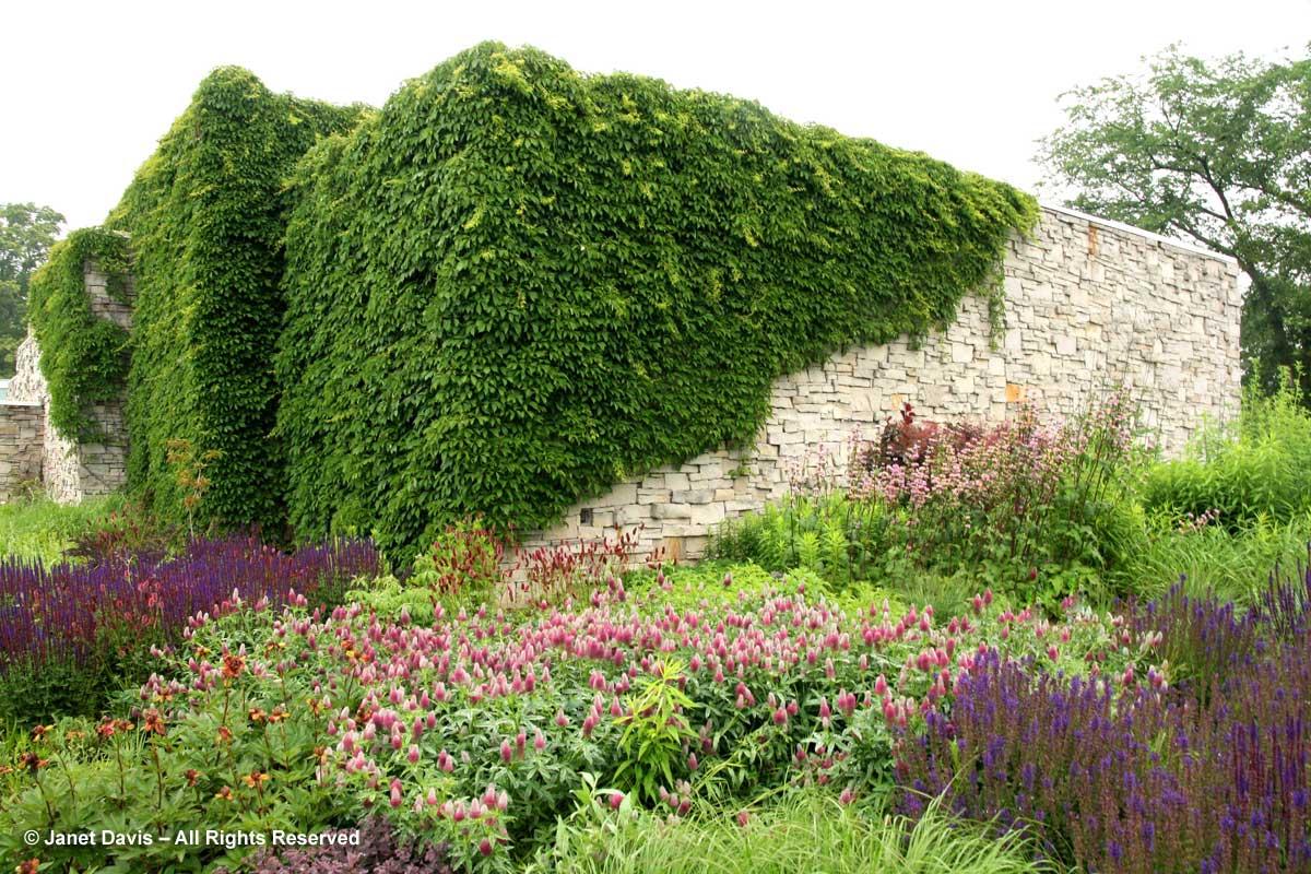 Plants-short-lived-Trifolium rubens-Piet Oudolf border-TOronto Botanical Garden