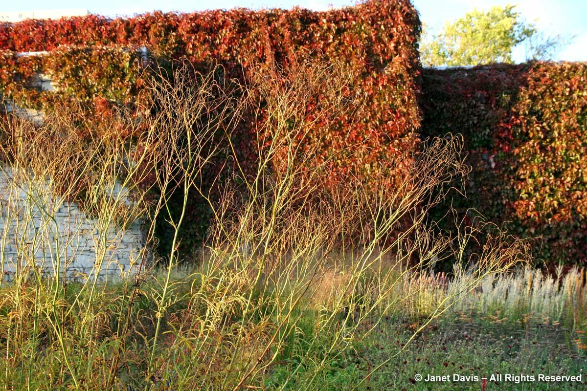 Sanguisorba tenuifolia 'Alba'-autumn-Piet Oudolf border-Toronto Botanical Garden