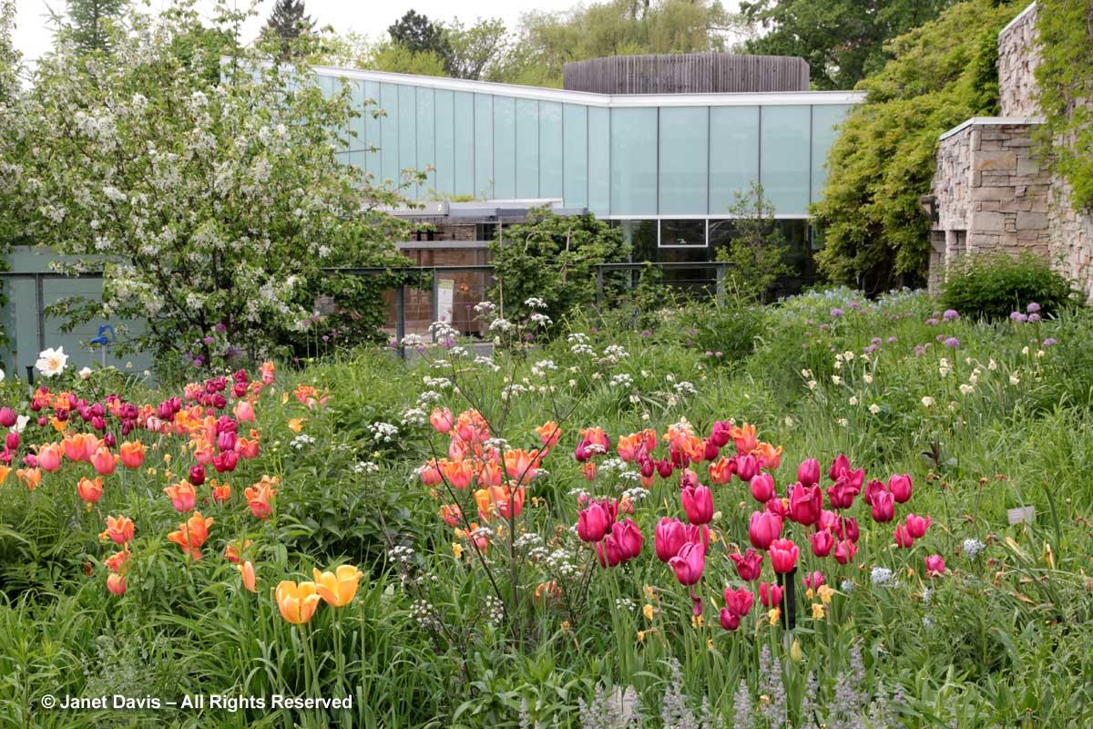 Seasonal 1a-Spring-Piet Oudolf Entry Garden-Toronto Botanical Garden
