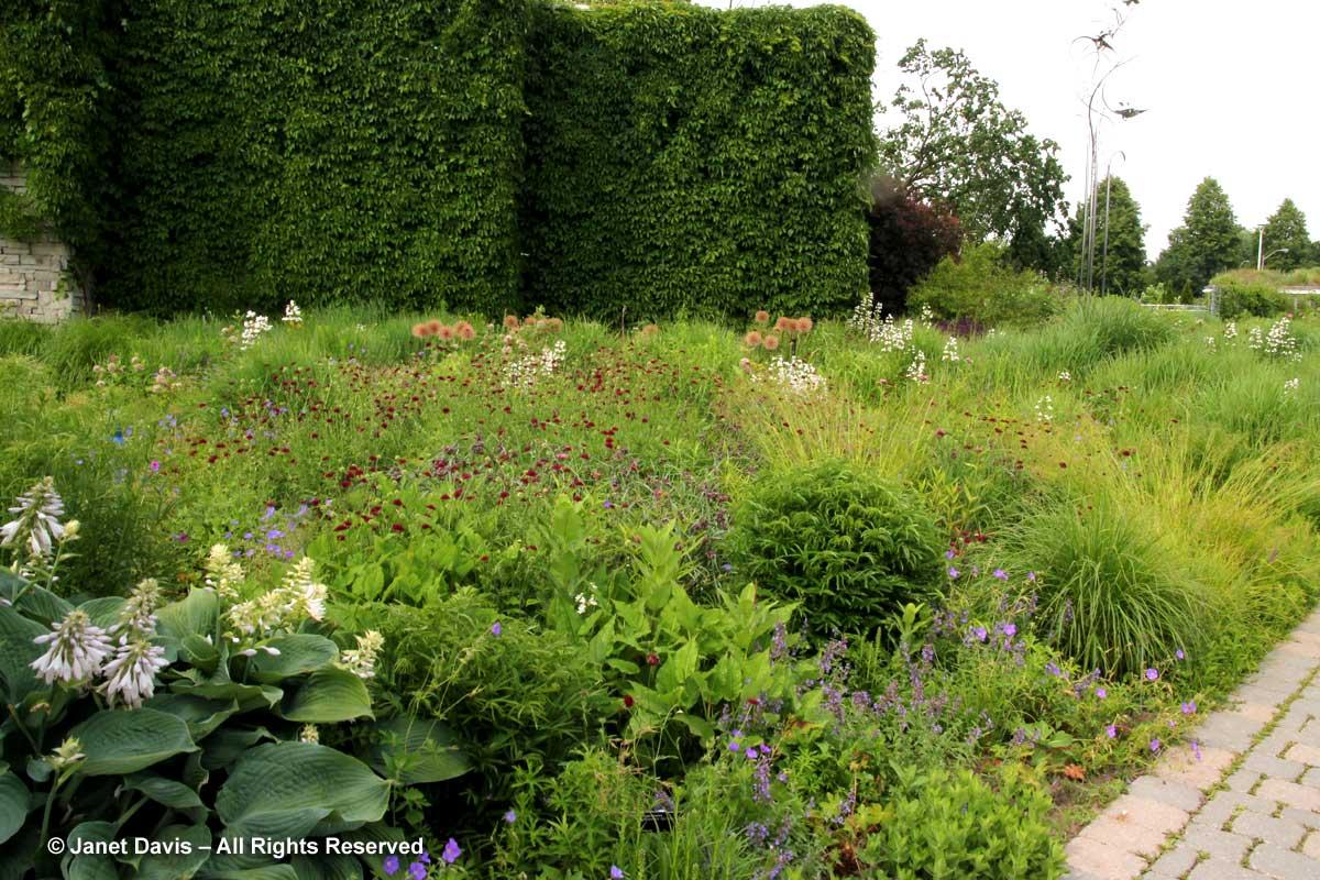Seasonal 3a-early summer-Piet Oudolf entry border-Toronto Botanical Garden