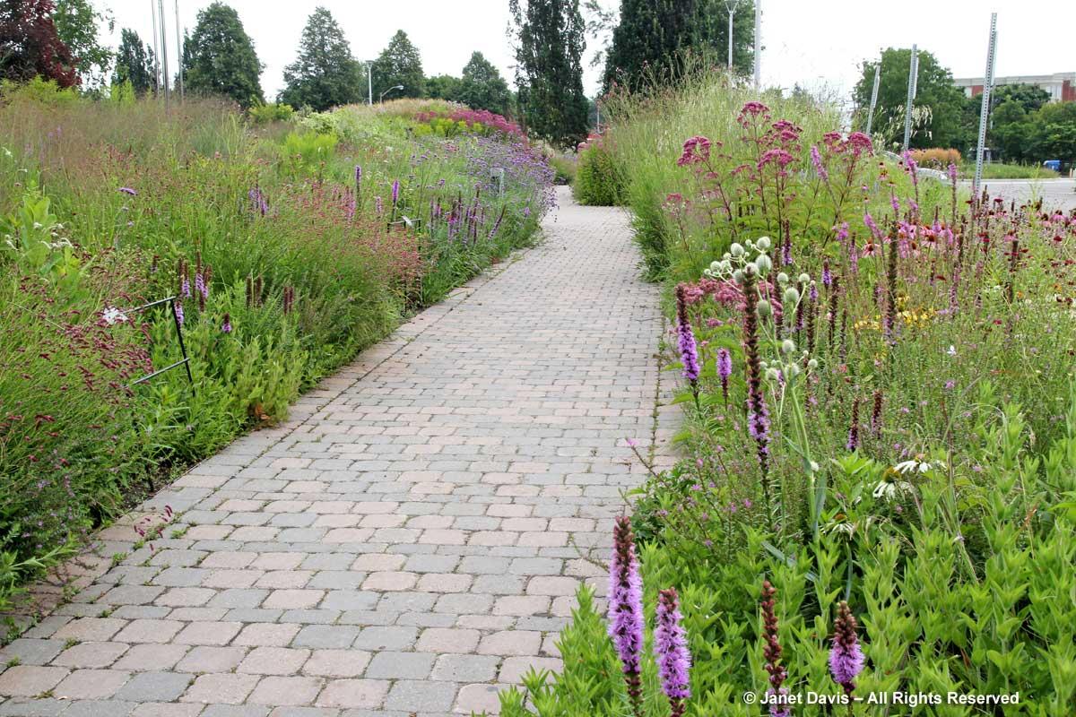 Seasonal 4b-late summer-Piet Oudolf-designed entry border-Toronto Botanical Garden-Summer