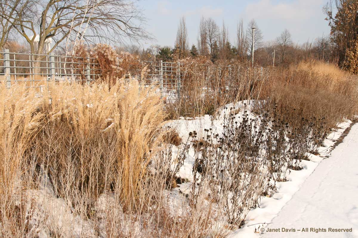 Piet oudolf meadow maker part one janet davis explores colour - Gardening mistakes maintaining garden winter ...