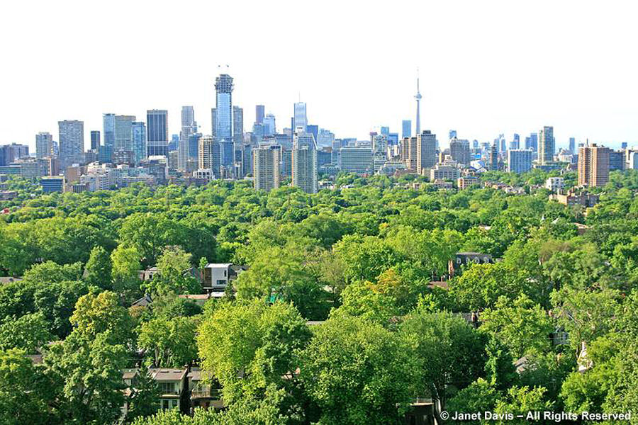 City of Toronto-urban canopy