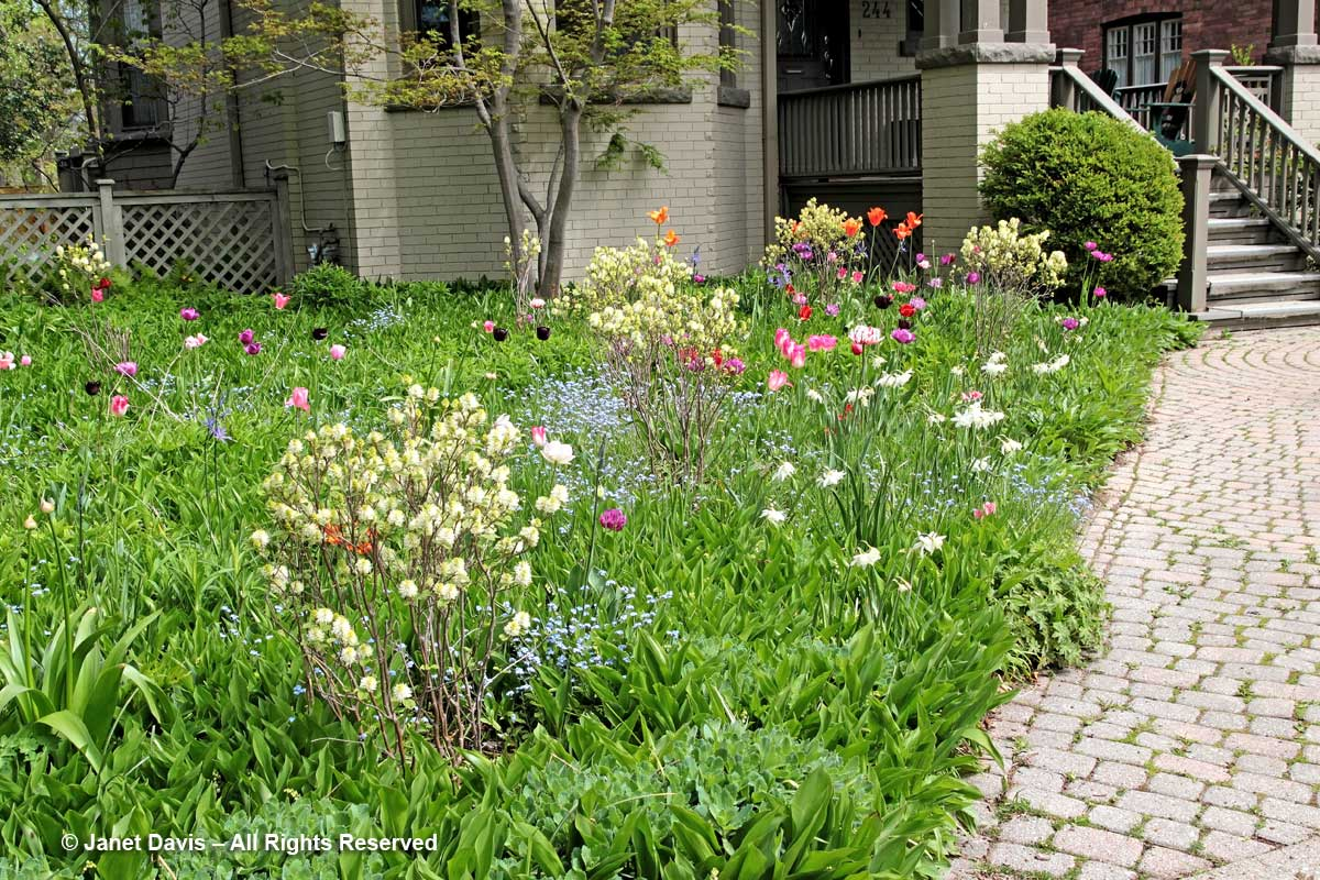 Front Meadow-May19