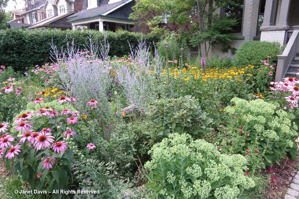 Front Pollinator Garden-Summer
