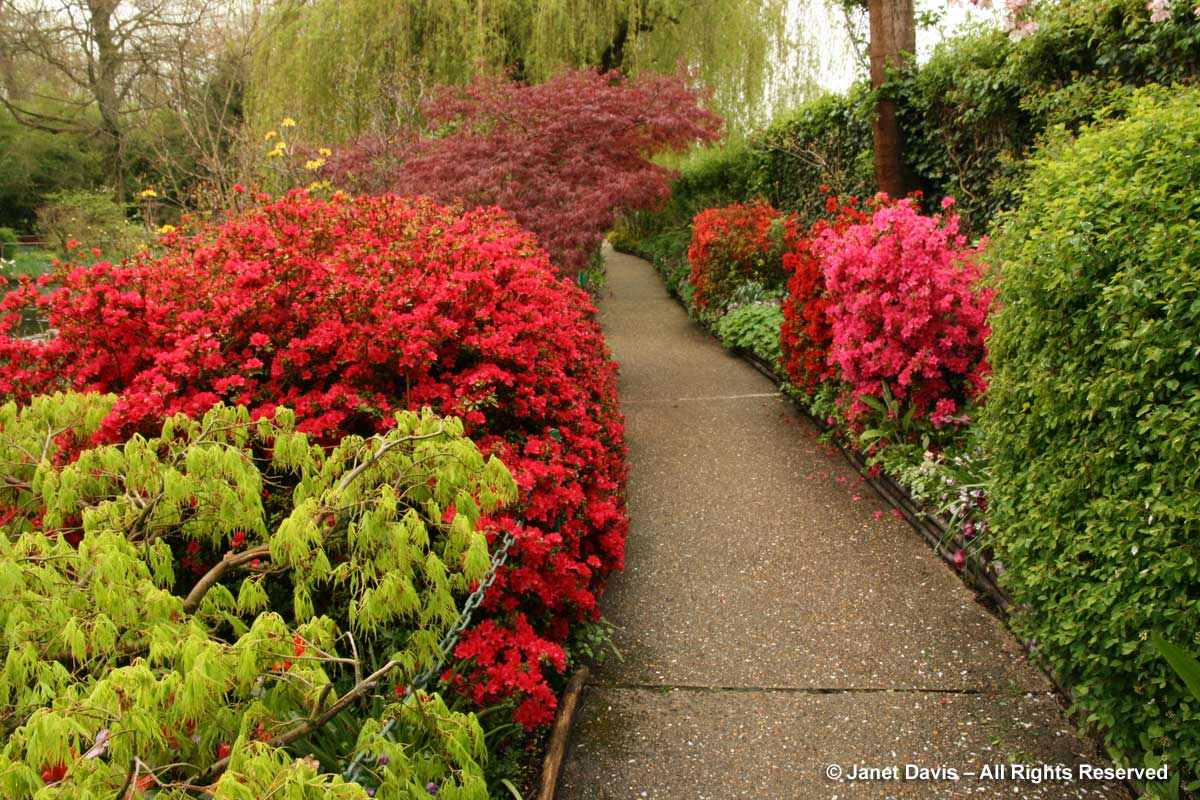 Giverny-Monet's Garden-Azaleas & Japanese maple