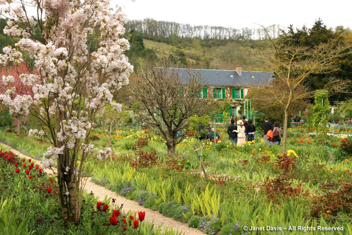 Giverny-Monet's Garden-Clos Normand-Prunus Amanagowa-Japanese cherry