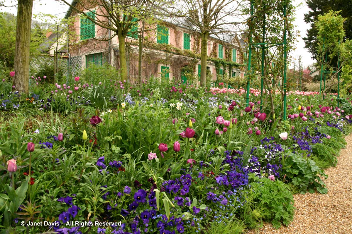 Giverny-Monet's Garden-Clos Normand-tulips & pansies