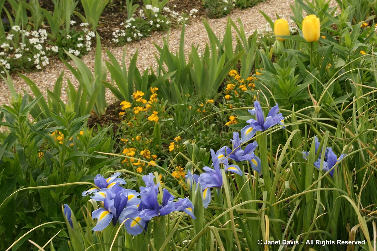 Giverny-Monet's Garden-Iris x hollandica & yellow flowers
